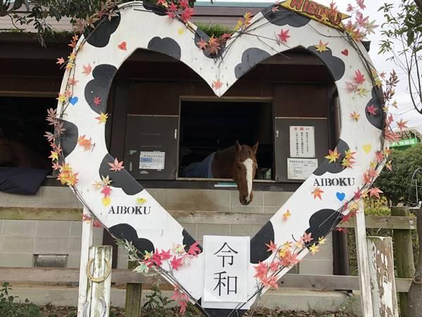 愛知牧場馬