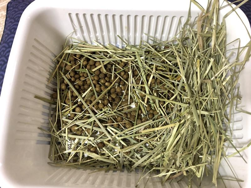 うさぎの牧草入れやトイレにおすすめ!食器ザル掃除方法